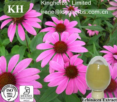Echinacea Extract, 1%,2%,2.5%,4% Cichoric acid
