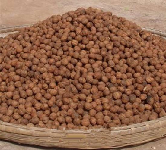 Small walnut paper thin walnut low fat food