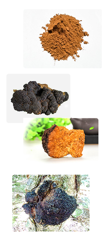 Organic Chaga extract manufacturer & supplier