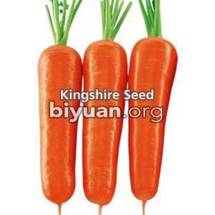 New Kuroda Carrot