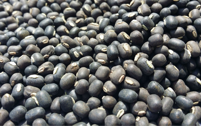 BLACK MATPE BEANS / Black Matpe Beans for Sale New Crop/Organic Black Matpe Beans