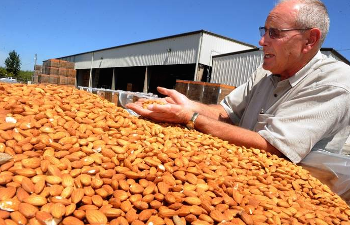 Grade A California Almond Nuts