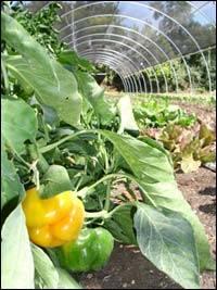 Nitrogen Fixing Biofertilizer, Azospirillum, Organic Fertilizer