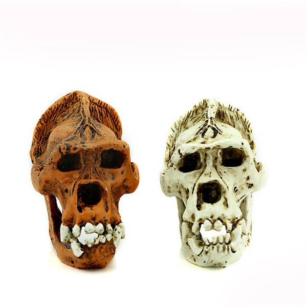 Custom 1/6 Warrior Alien Skull Trophy Antique Finish Hunter Predator 47*10.5*21 cm skeleton medical