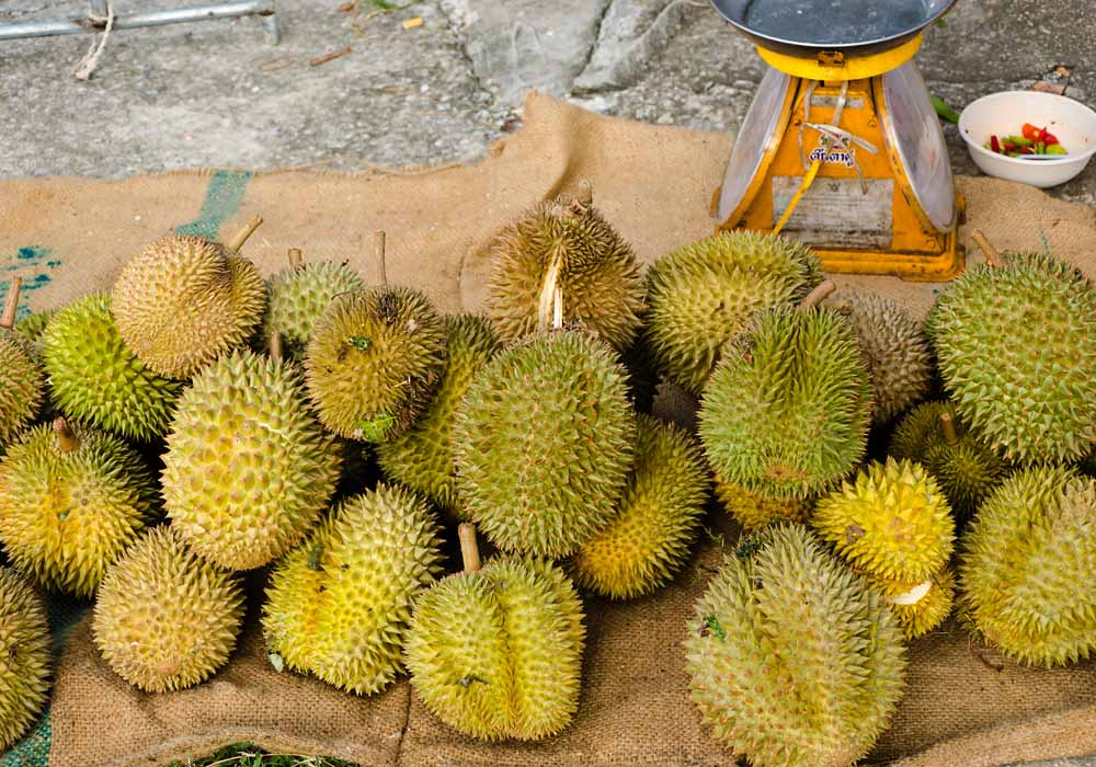 FRESH DURIAN FOR SALE / DURIAN