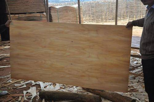 Durable Eucalyptus Core Veneer