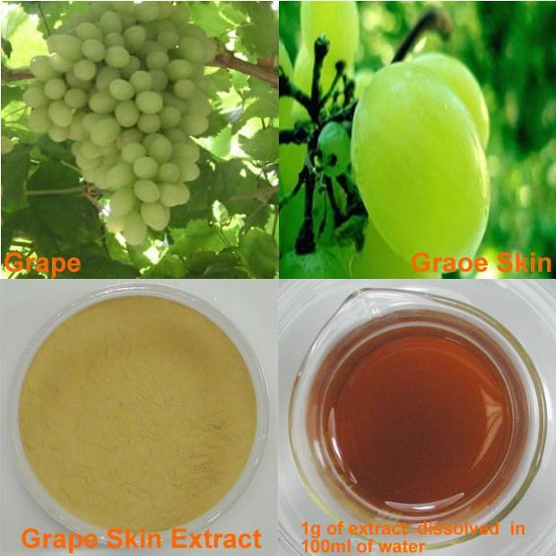 Grape Skin Extract Polyphenols  30%