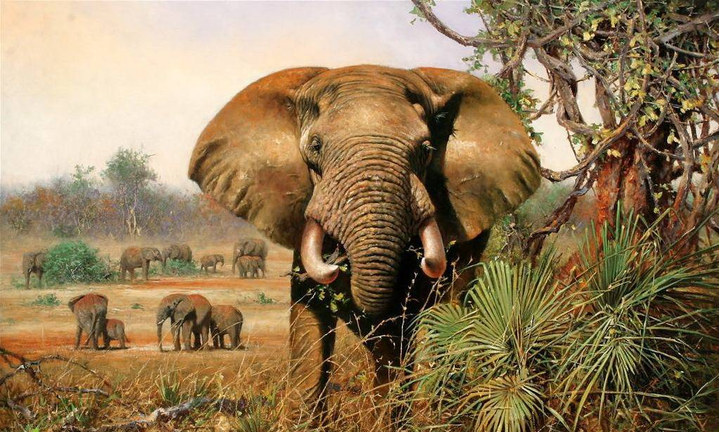 Animal Realism Oil Painting Arts on Canvas