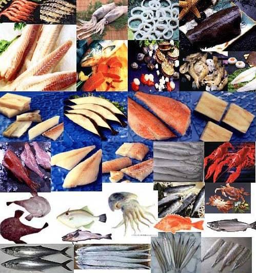 monkfish,beltfish,red fish,chum salmon,sole,yellow croaker,spanish mackerel and squid
