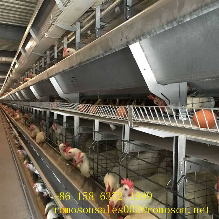 enriched caged hens_shandong  tobetter  economical and practical