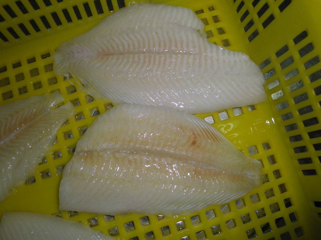 Yellow Fin Sole Fillet/Role