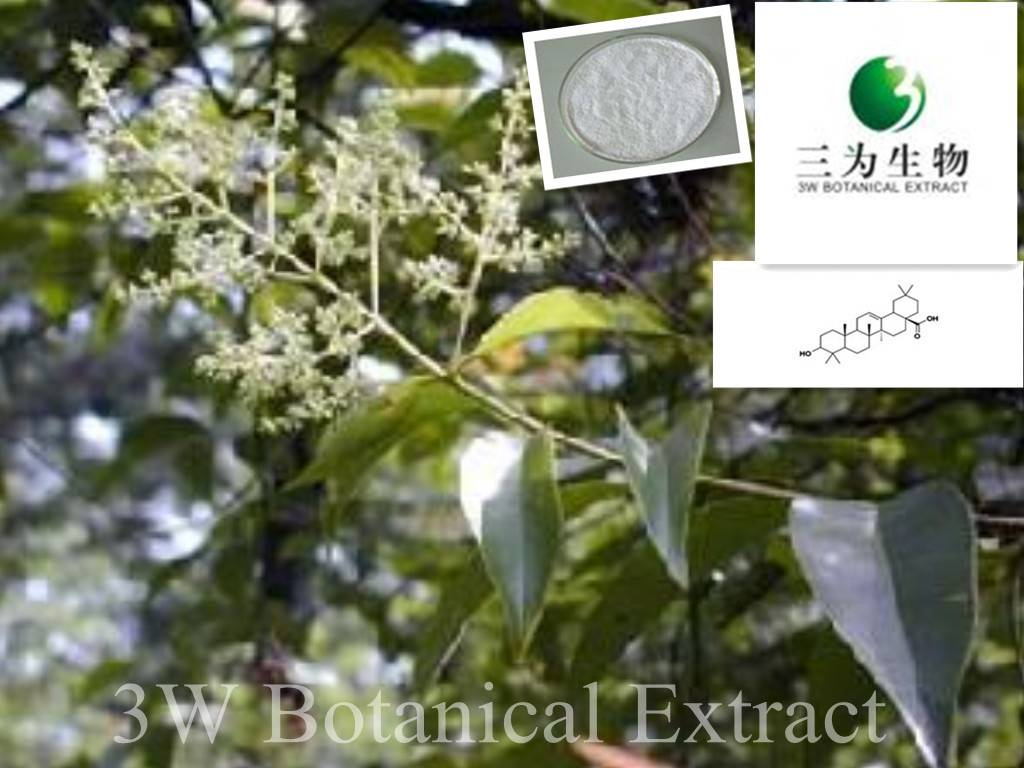 Ligustrum Extract Oleanolic Acid(sales05@3wbio.com)