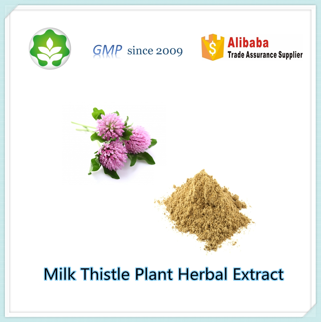 milk thistle plant herbal extract