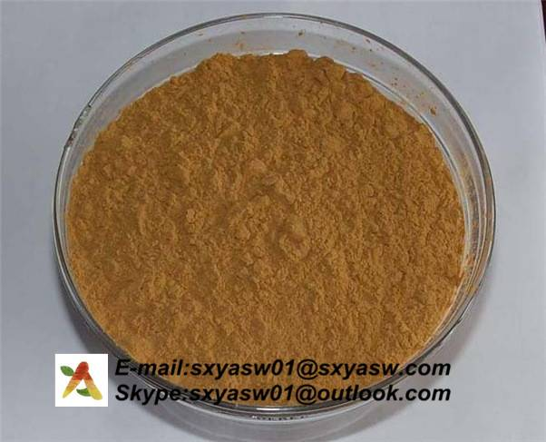 Natural Kelp Extract fucoxanthin CAS No 3351-86-8