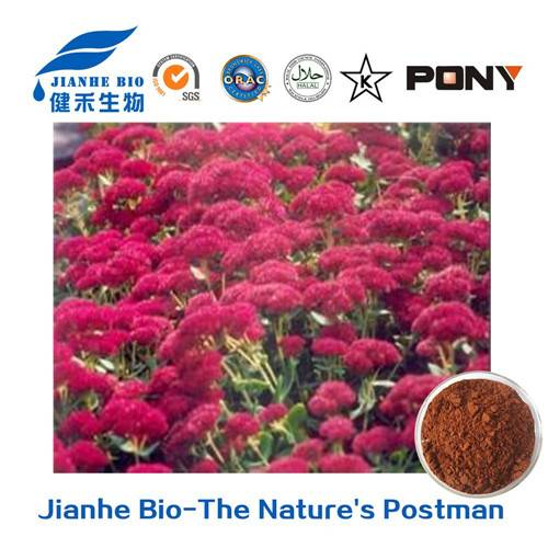 Natural Extract Rhodiola Rosea Extract