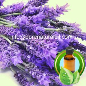 100% Pure France Lavender Essential Oil