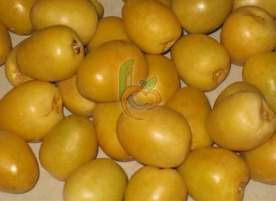 Fresh barhi dates Fron Egypt