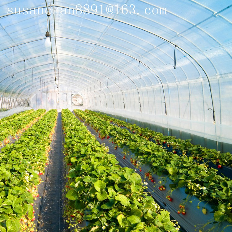 Big size high quality PE material plastic agricultural greenhouse film