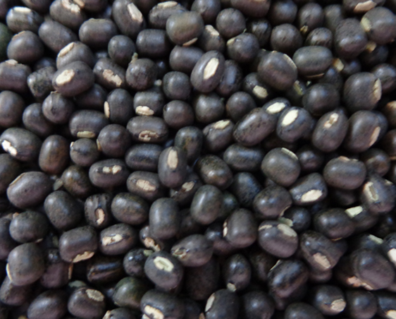 Black Whole Urad Dal for sale