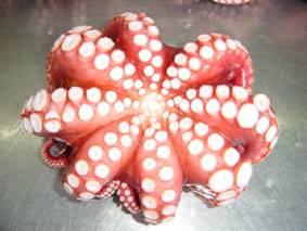 Octopus-Tako