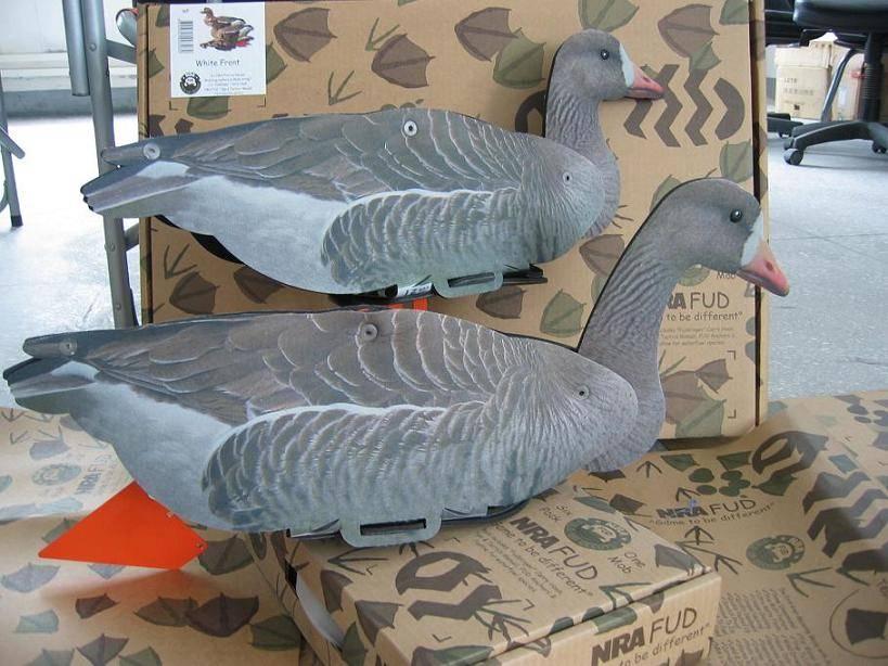 White Front Goose