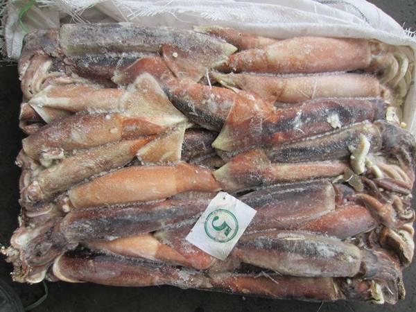 Frozen Illex Squid