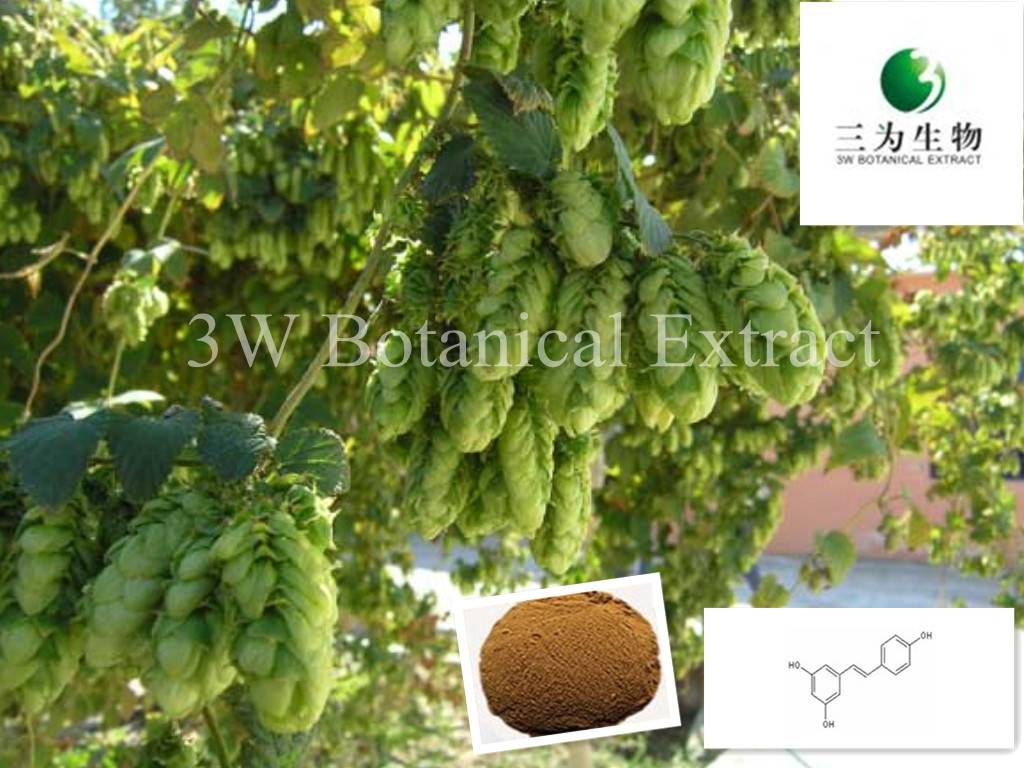 Hop Flower Extract(sales05@3wbio.com)
