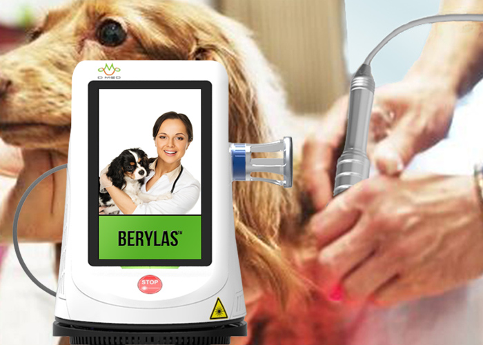 Portable 15watts 980nm Chiropractic Veterinary Laser Therapy