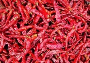 chili pepper/ Capsicum Extract