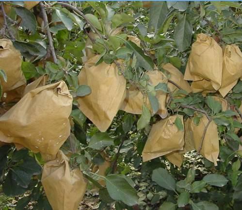 Fuji Apple growing paper bag, Fuji Apple protection paper bag, Fuji Apple packaging paper