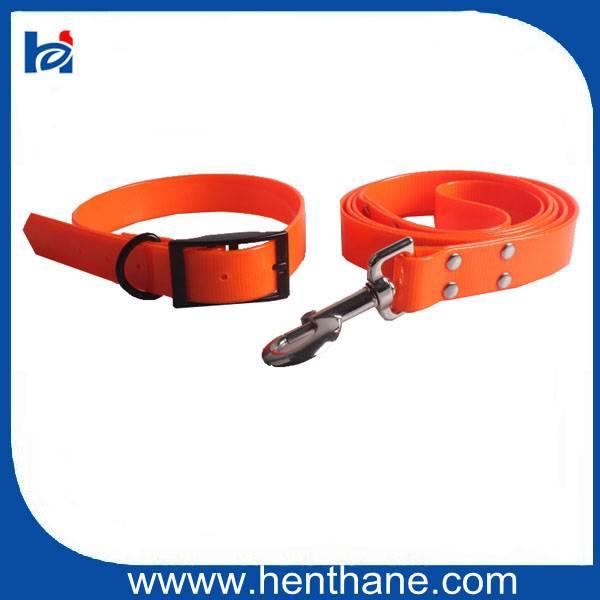 dog collar and dog leash