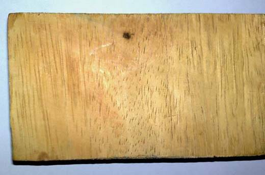 Sell Iroko Melicia Excelsa Wood