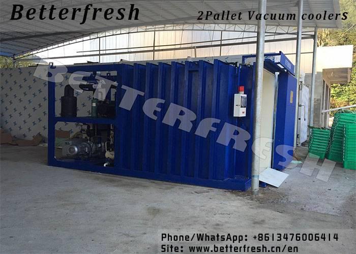 Dongguan BetterfreshVacuum cooling refrigeration Leek Pepper Celery Green Bean Romaine Mustard Pita