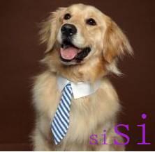 fashion Pet tie