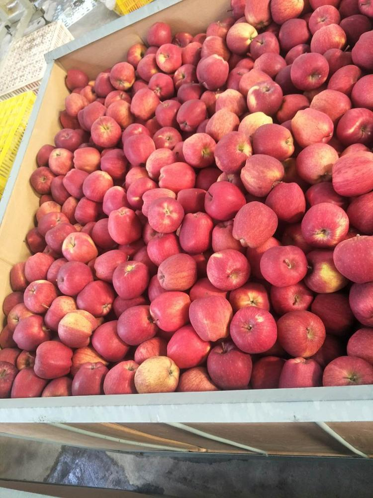 Fresh red star apples