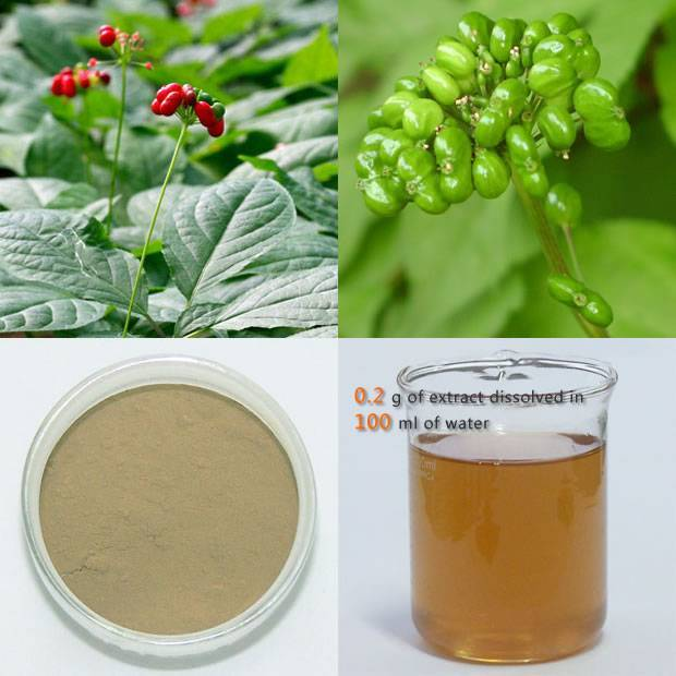 Panax Ginseng Berry ( Fruit ) Extract 70-80%UV