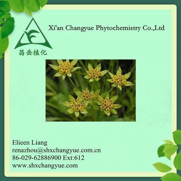 Chai hu herbal extract,radix bupleuri extract,Chinese thorowax root extract