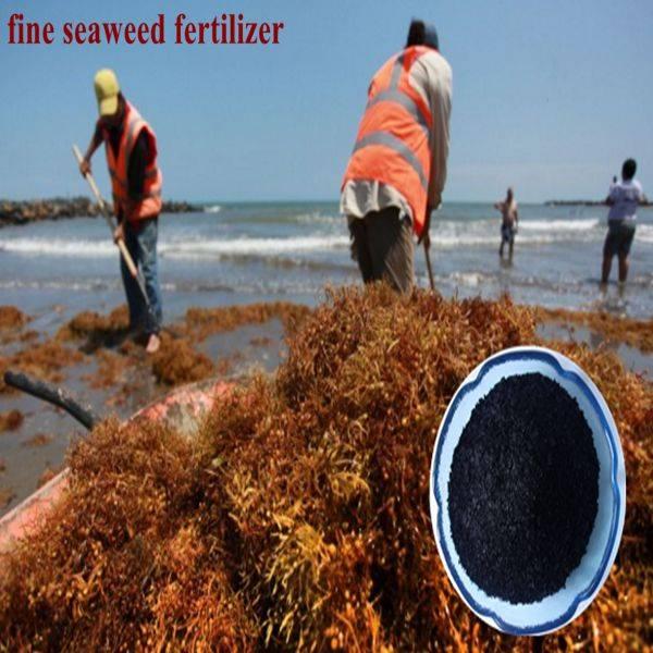 45-55%organic matter seaweed extract fertilizer