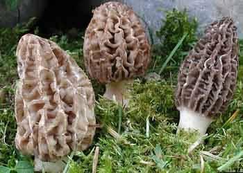 wild mushrooms,kidney beans,nuts,seeds,kernel,agriculture food,morels