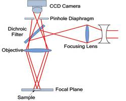 Confocal Laser Scanning Microscopy (CLSM)