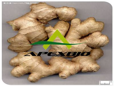 Ginger Root Extract(5%gingerols,HPLC )