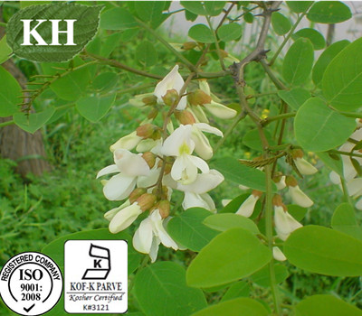 Sophora Japonica Extract 95%-98% quercetin by HPLC