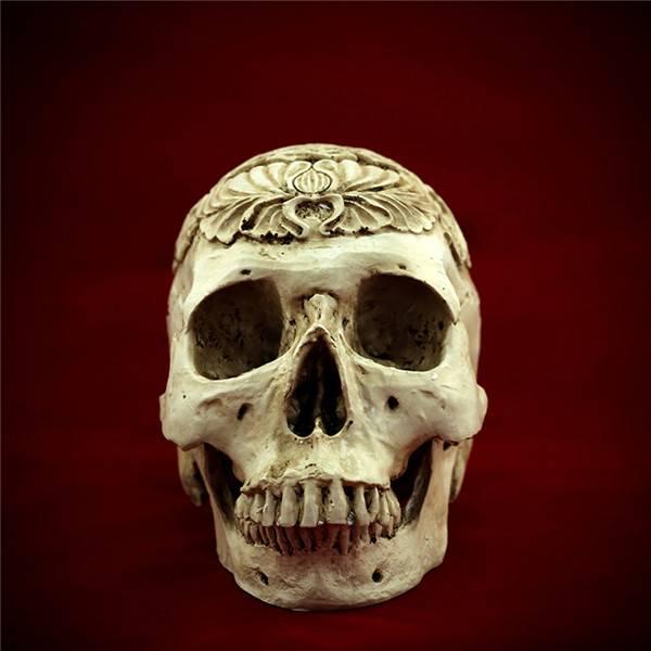 Egypt Human Skull skeleton bone Replica Resin Model Medical Realistic lifesize 1:1 Halloween