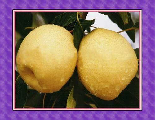 Fresh Su Pear