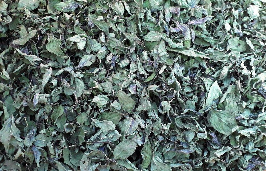 High Quality Dried Peppermint