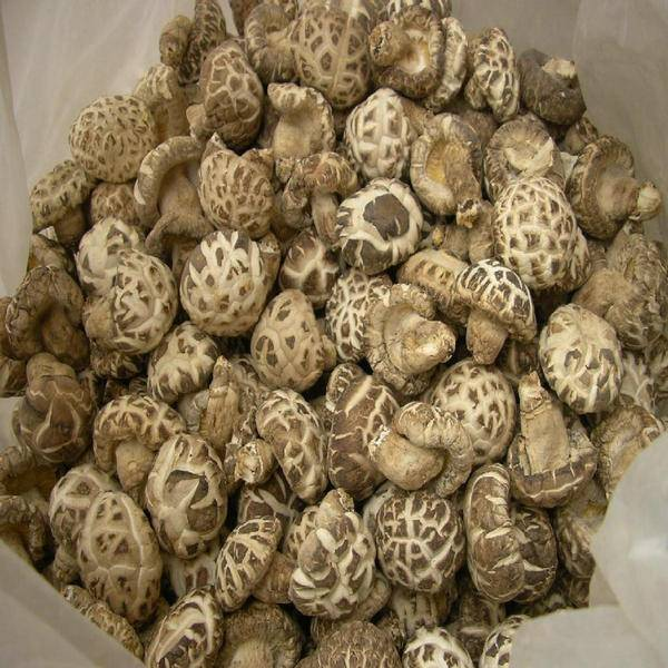 Whole Dried Shiitake Mushroom