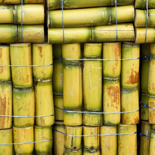 HIGH QUALITY FROZEN SUGARCANE