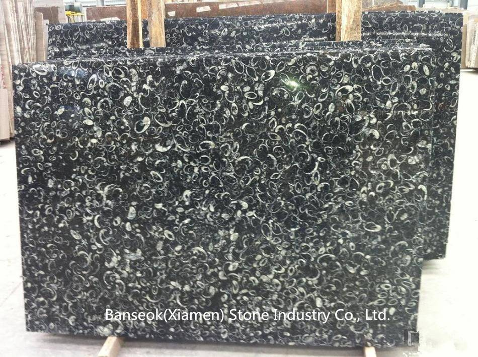 Black Fossil Marble, Pure Black Marble