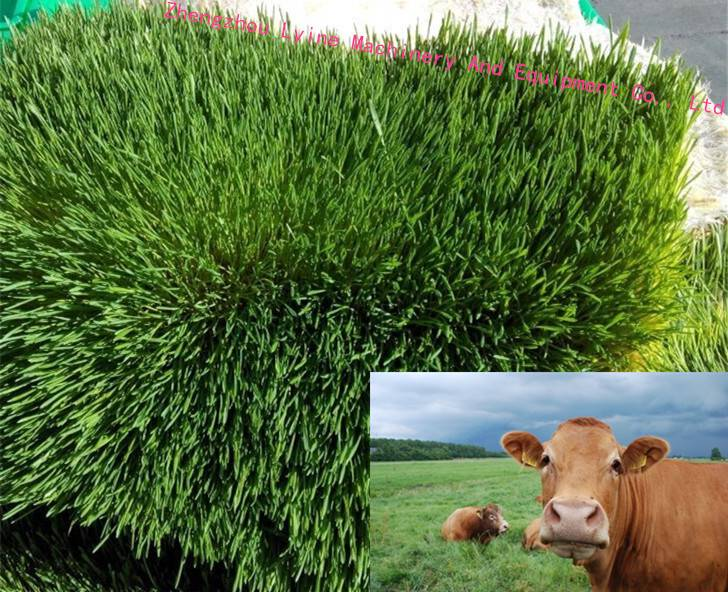 Trade Assurance automatic cattle green fodder growing machine