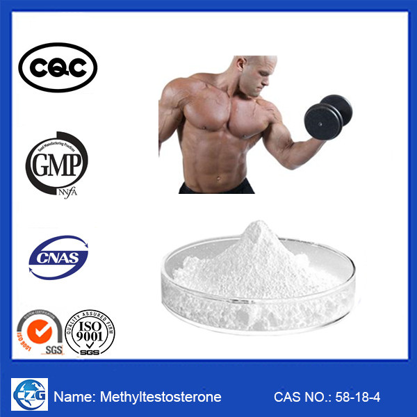 Methyl testosterone Muscle Building Steroids M1T / 17-Alpha-Methyl-Testosterone